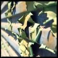 Green Flakes 3/3